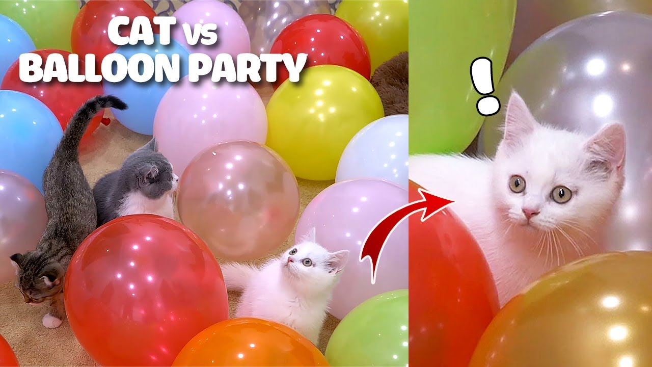 Cat Challenge Funny Cat Playing With Balloons Can They Stand The Balloons Explode Sound Woa Kitty Youtube