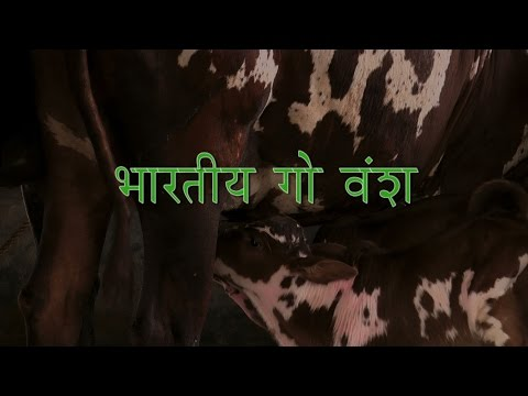 Cow breeds in india with price in hindi