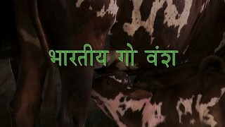 Indian Cow Breeds (Bharatiya Go Vansh) - Hindi