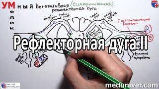Вегетативная рефлекторная дуга - meduniver.com
