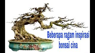 Chinese bonsai inspiration