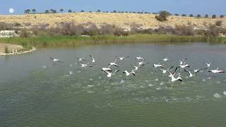Haya's wetland at Al Ansab is a natural wonderland in the heart of Muscat