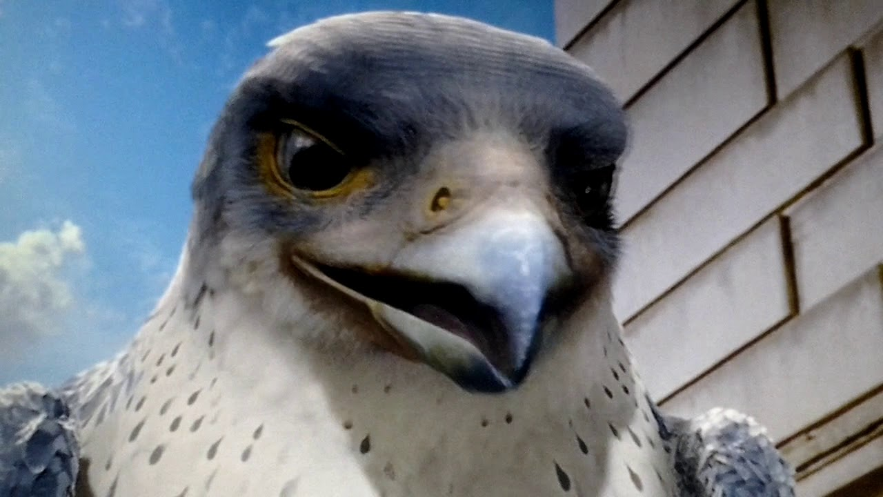 Stuart Little 2 Falcon Youtube