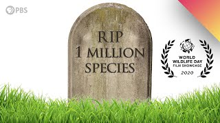 1 MILLION Species Could Go Extinct Heres Why.