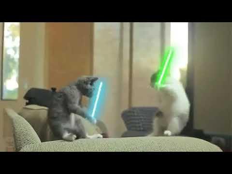 Star wars (con gatos)