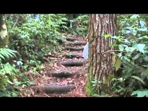 Vermont Nature Trail St. Vincent Island.wmv - YouTube