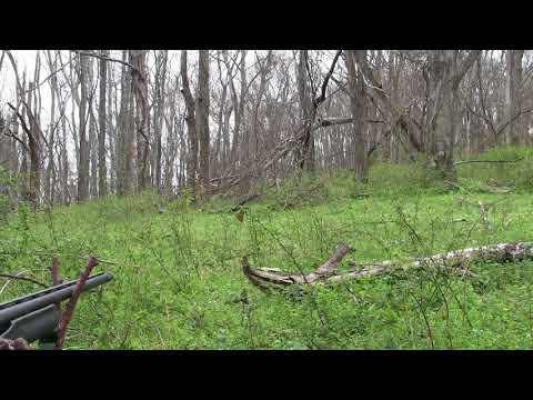 Tennessee Turkey Hunt 2017 Opening Day Monster Gobbler