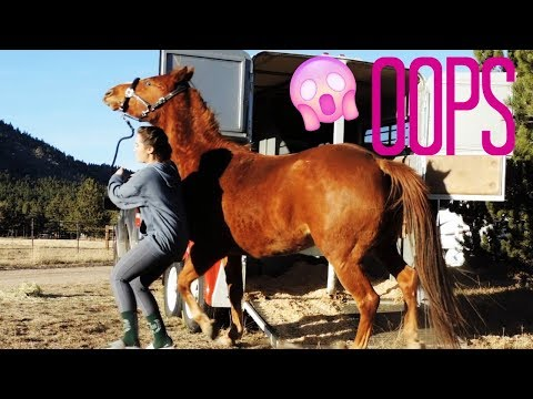 Trailering A Horse That HATES THE TRAILER  (How To)