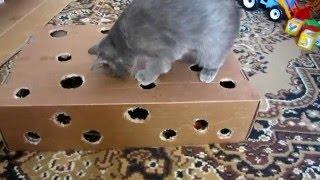 приколи про котів 2016 ( ігрушки для котів )