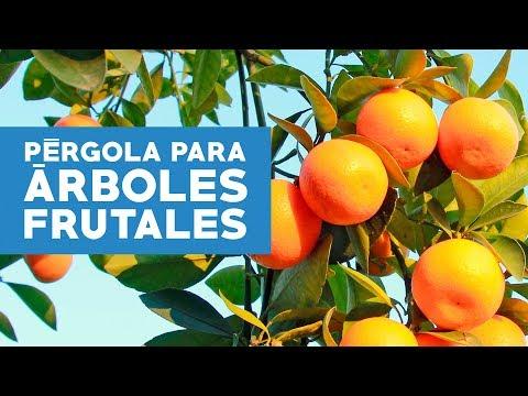 C mo construir una p rgola y cuidar los rboles frutales - Como cuidar los arboles frutales ...