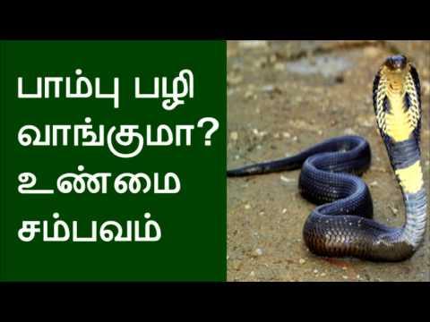 பாம்பு பழிவாங்குமா? உண்மை சம்பவம் Snake revenge? True incident