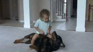Rottweiler Scooby  Wrestle With A Baby