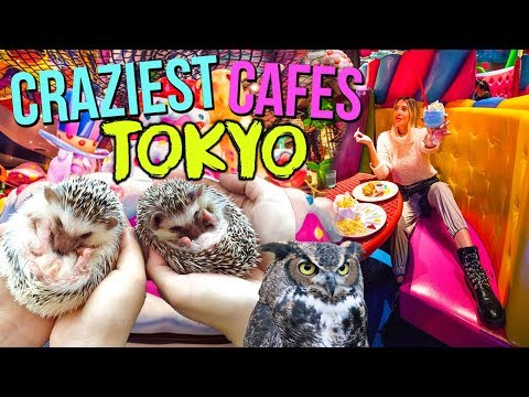 TOP CRAZIEST THEMED CAFES IN TOKYO 2019 (Monster, Hedgehog, Owls)