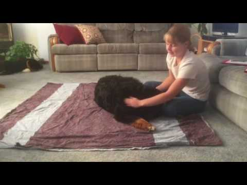 Canine Massage Sequence Part 1