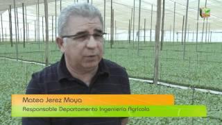 Proceso de manipulación  y envasado de las frutas y hortalizas