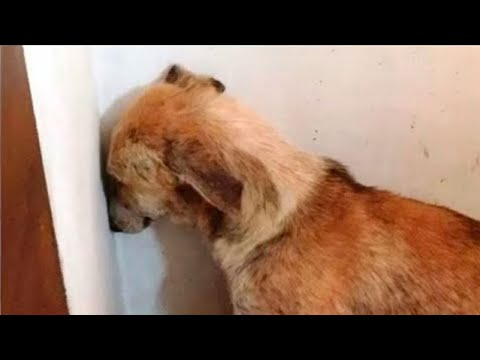 Pies Zabrany Ze Schroniska Godzinami Patrzył W ścianę. Właściciele Wpadli Na Pomysł, Jak To Zmienić