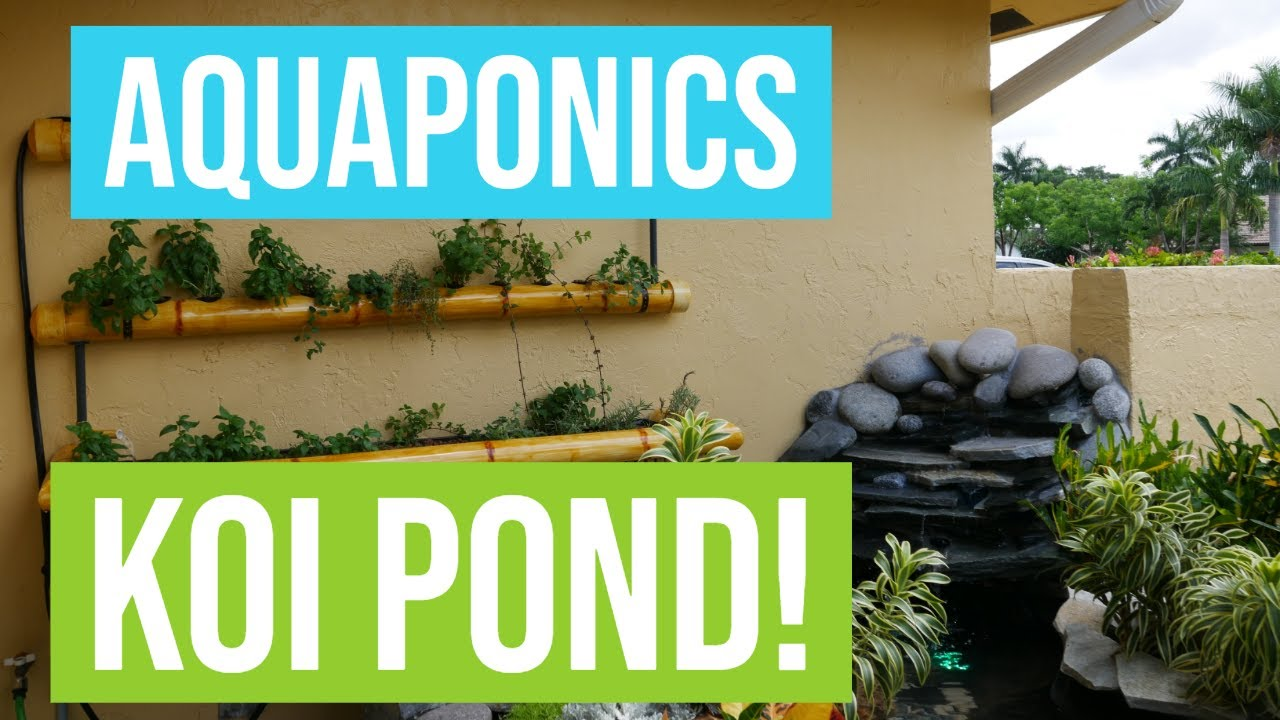 AQUAPONICS SYSTEM WITH WATERFALL!