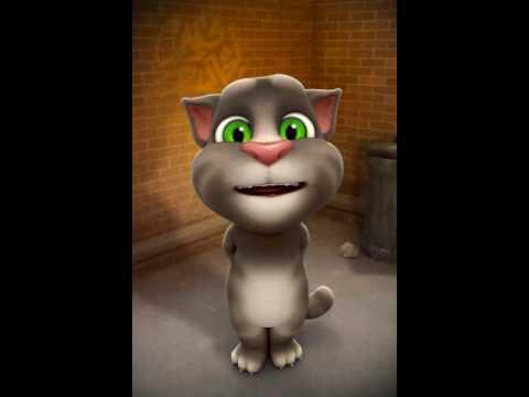 No quiere enamorarse ( Osuna) del gato tom