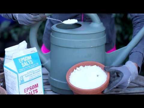 Uses for Epsom Salts in the Garden : Around the Garden