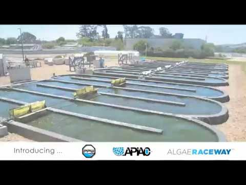 Algae Products and Services