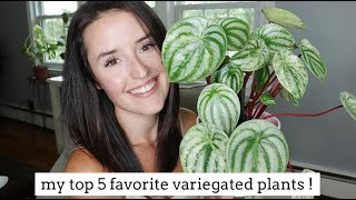 My Top 5 Favorite Variegated Plants! | & Care Tips!