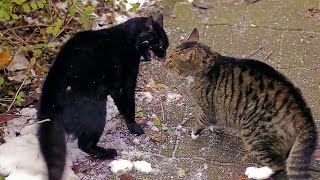 big alley cats fight