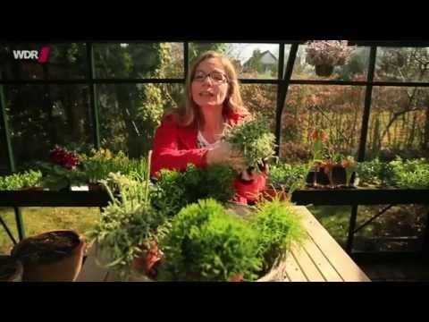 5-pflanzentrends-2015---blumen-neuheiten-für-balkon,-terrasse,-fensterbank---wdr-servicezeit