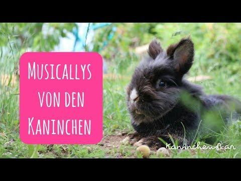 Musicallys von den Kaninchen #4 🎵🐇 | Kaninchenstar