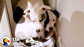 Pittie Won't Leave His Long-Lost Brother's Side Ever Again | The Dodo Pittie Nation
