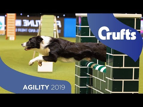 Agility - Championship Final | ​Crufts 2019