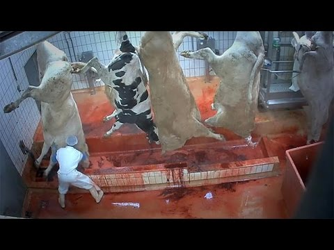 Animal cruelty: is violence inherent to abattoirs?