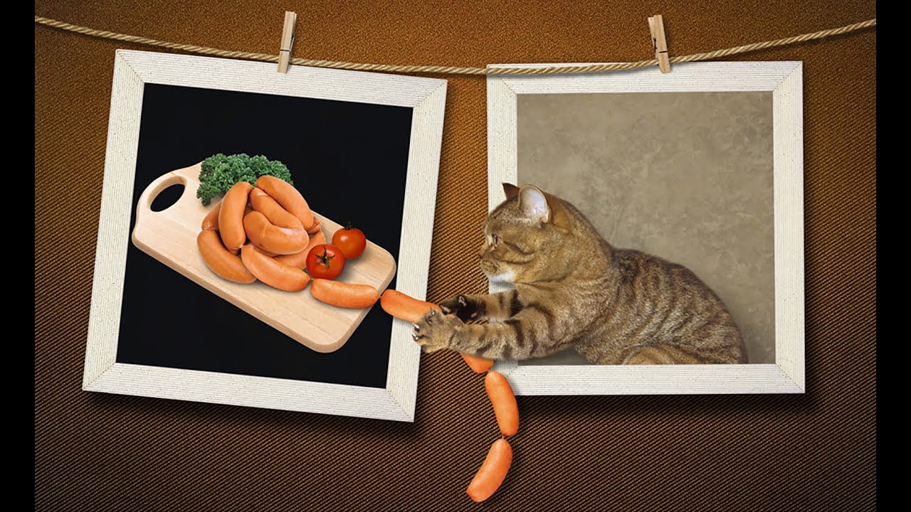 этой кот с куском колбасы гифка после которых