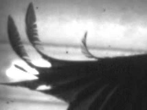 Broadbill wing flutter in wind tunnel (high-speed video)