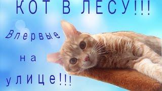 ПОДКИДЫШ В ЛЕСУ ИЛИ СНОВА УЛИЦА?.Cat for the first time on the street