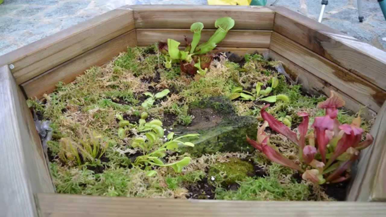 plante carnivore dans un jardin