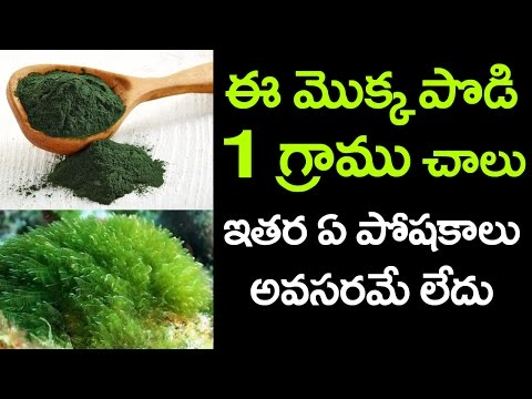 Amazing Benefits of Spirulina | How to Reduce Cholesterol | Best Health Tips | VTube Telugu