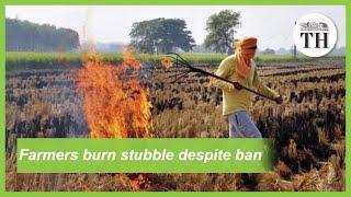 Farmers continue to burn stubble despite ban