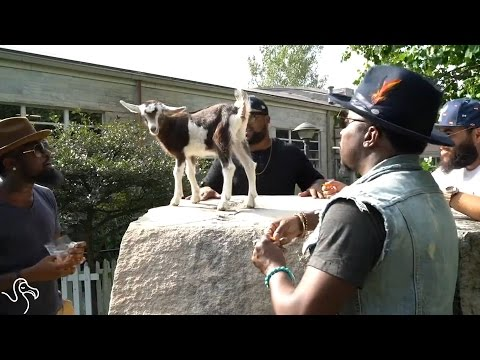 Guys Serenade A Baby Billy Goat