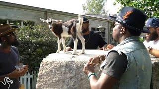 Guys Serenade A Baby Billy Goat