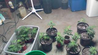Recycling Organic Soil For Cannabis ; Why You Don't Need Super Soil part 8