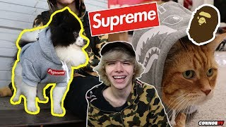 Turning my Cat and Dog into a Hypebeast! Supreme, Bape
