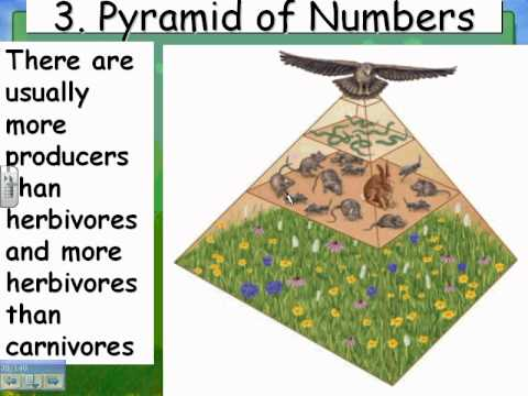 12 06 HN Ecology 03 Energy Pyramids And Biomagnification