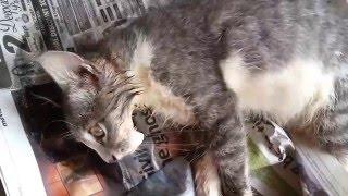 Poisoned cat
