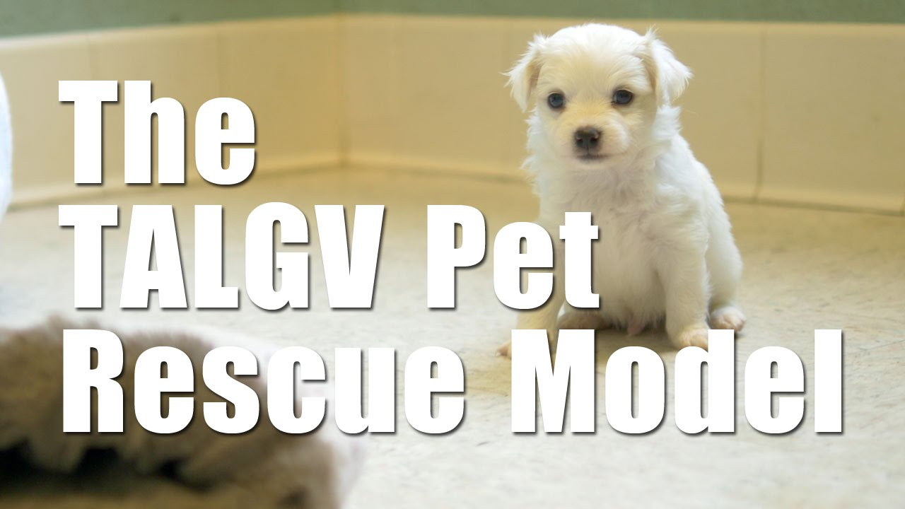 About The Animal League Of Green Valley The Animal League Of Green Valley