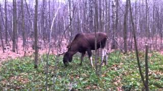 Парнокопытное млекопитающее семейства оленевых, пёсик и эксперты в Москве осенью
