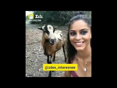 Zili funny videos | Funny Jokes | TiK Tok Funny videos ...