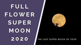 Full Flower Super Moon 2020 - The last super moon of 2020