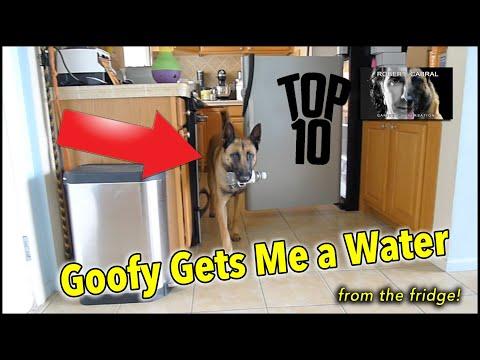Goofy Gets Me a Water - Dog Tricks - Smart Dog