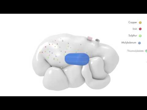 Coseicure and Cosecure Bolus - how it works