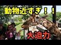 姫路セントラルパーク!姫路のサファリパークが、めっちゃ最高!!